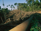 Oil Pipeline Running Through Amazon Basin Forests Photographic Print by Steve Winter
