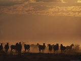 Herd of Zebras in Silhouette at Twilight Photographic Print by Kim Wolhuter