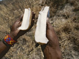 San Bushman Holds a Large Tuber He Has Split Open Photographic Print by Joy Tessman