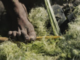 Close View of a San Bushman Making Rope From Plant Fiber Photographic Print by Joy Tessman