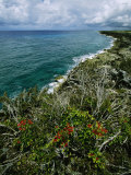 View of a Rocky Coastline with a Blooming Bush in the Foreground Photographic Print by Steve Winter
