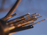 Close View of Metal Tipped Hunting Arrows Photographic Print by Joy Tessman