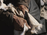 San Bushman Softens Leather, Part of the Process of Tanning a Hide Photographic Print by Joy Tessman