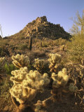 Desert Landscape with Saguaro, Organ Pipe and Teddy Bear Cholla Cacti Photographic Print by Richard Nowitz