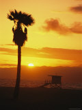 Palm Tree Silhouetted on Venice Beach at Sunset Photographic Print by Richard Nowitz