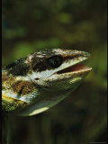 Close View of the Head of a Lizard Photographic Print by Steve Winter