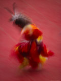 Native American Dancer in Traditional Costume Dancing at a Powwow Lmina fotogrfica por Michael Melford