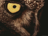 Close View of an Owl's Face Photographic Print by Kim Wolhuter