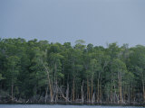 Tree-Lined Coast of Southern Florida in the Everglades Photographic Print by Raul Touzon