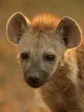 Close View of the Face of a Young Spotted Hyena in Afternoon Light Photographic Print by Beverly Joubert