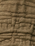 Close Detail of the Skin of an African Elephant Photographic Print by Beverly Joubert