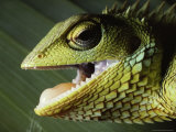 Close View of a Lizard with Its Mouth Open Photographic Print by Carsten Peter