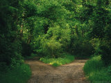 Diverging Trails in a Woodland Photographic Print by Raymond Gehman