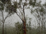 Artistic View of Trees Through Rain-Drenched Glass Photographic Print by Randy Olson