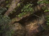 Australian Aboriginal Rock Art on a Rock in Kakadu National Park Photographic Print by Randy Olson