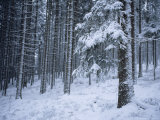 Winter View of the Black Forest with a Fresh Coat of Snow Photographic Print by Taylor S. Kennedy
