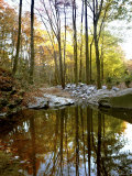Woodland View at Long Branch Nature Center Photographic Print by Rex Stucky