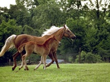 Mare Runs with Her Foal Through a Pasture Photographic Print by Rex Stucky