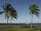 Palm Trees Frame a Lone Sailboat Off the Shore of Florida Fotografisk tryk af Klaus Nigge