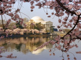 Cherry Blossoms Frame the Jefferson Memorial Across the Tidal Basin Photographic Print by Rex Stucky