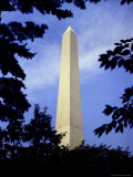 Tree Branches Frame the Washington Monument Photographic Print by Rex Stucky
