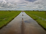 Flooded Road Through Green Fields Under a Cloud-Filled Sky Photographic Print by Randy Olson