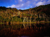 Tea-Trees Reflected in Water at Tidal River, Wilsons Promontory National Park Photographic Print by Richard I'Anson