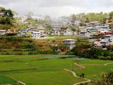 Rice Paddies with Houses in Background Photographic Print by Craig Pershouse