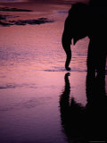 Silhouetted Elephant Reflected in Reu River at Sunset Photographic Print by Richard I'Anson