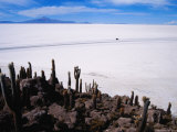Huge Cacti on Isla De Los Pescadores Above Salar De Uyuni Photographic Print by Craig Pershouse