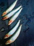 West Australian Sardines on Wet Black Slate Photographic Print by John Hay