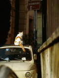 Cat Sitting on Roof of Car Photographic Print by Ryan Fox