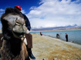 Camel Rides by Lake Photographic Print by Lindsay Brown