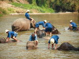 Mahouts Bathing Elephants, Thai Elephant Conservation Centre Photographic Print by Andrew Bain