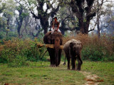 Elephants Returning to Elephant Breeding Centre in Sauraha Photographic Print by Richard I'Anson
