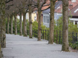 Avenue and Houses on Haugeveien Photographic Print by David Borland