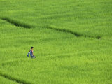 Walking in Green Rice Fields Near Mae Hong Son Photographic Print by Austin Bush