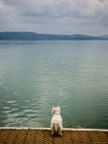 Dog Overlooking Lago Trasimeno Photographic Print by James Braund