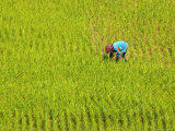 Tending to Rice Fields Outside Muang Ngoen Photographic Print by Austin Bush