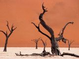 Tree Skeletons on an Alkali Pan and Giant Sand Dune, Dead Vlei Photographic Print by Karl Lehmann