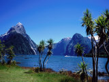 Cabbage Trees at Milford Sound with Mitre Peak in Background at Left Photographic Print by Holger Leue