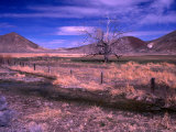 Bare Tree in a Paddock Near Battle Mountain Photographic Print by Dominic Bonuccelli