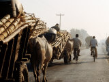 Bullock Carts of Bamboo Scaffolding on Mahendra Highway Photographic Print by Lindsay Brown