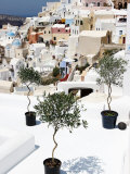 Olive Trees Overlooking Houses Photographic Print by John Sones