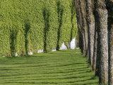 Trees, Lawn and Shadows at Bergenhus Photographic Print by David Borland