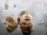 Japanese Macaque in Natural Onsen, Jigokudani Monkey Park Photographic Print by John Borthwick