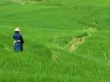 Woman Looking over Valley of Rice Outside Sapa Photographic Print by David Greedy