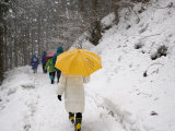 Girl with Yellow Umbrella Walking in Snow and Forest, Jigokudani Monkey Park Photographic Print by John Borthwick