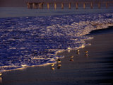 Surf Chasing Birds on Beach at Hermosa Beach Photographic Print by Christina Lease