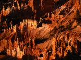 Hoodoos in Bryce Amphitheatre Photographic Print by Kraig Lieb